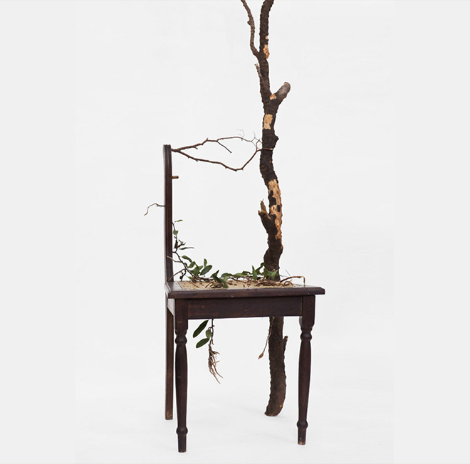 Rodrigo_Bueno_cultivates_botanical_life_within_nature-filled_furniture_11
