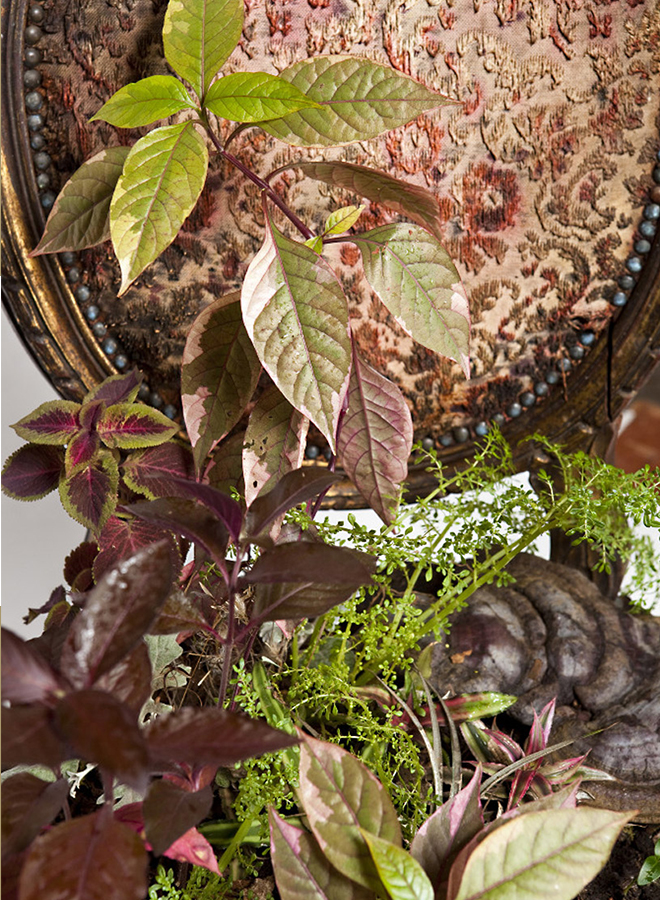 Rodrigo_Bueno_cultivates_botanical_life_within_nature-filled_furniture_3