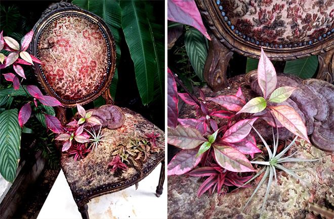 Rodrigo_Bueno_cultivates_botanical_life_within_nature-filled_furniture_8